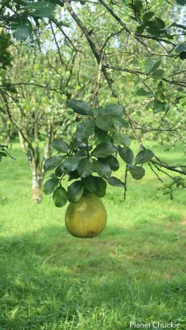"""""""Low Hanging Fruit"""""""